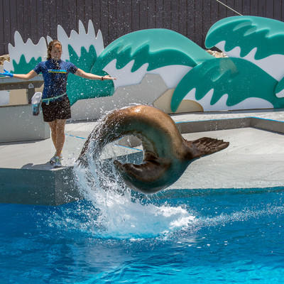 1cpm8ph6mn_julie_larsen_maher_1383_sea_lion_aquatheater_aq_06_12_13